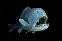 Peixes do abissal 5