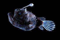 Peixes do abissal 7