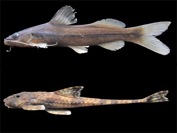Peixes exoticos sao encontrados no litoral de SP
