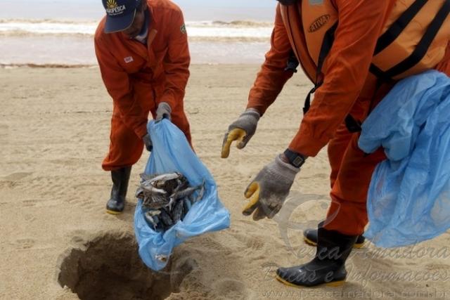 Peixes mortos comecam a ser enterrados por pescadores em Linhares-ES