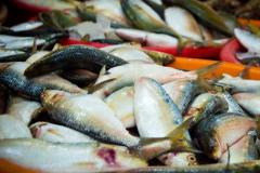 Pesca artesanal e industrial pode ter queda de US$ 10 Bilhoes por ano devido mudancas climaticas