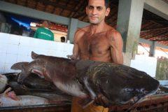 Pesca da gurijuba esta proibida e preocupa pescadores no Para