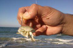 pesca-de-praia-iscas