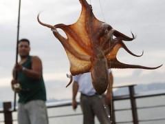 Pesca de polvo com agua sanitaria em Alagoas