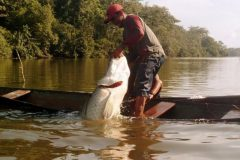 pesca-do-pirarucu-em-tocantins-2