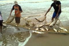 Pesca extrativista de roblo em Barra Velha - SC
