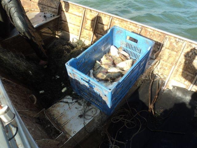 Pescado apreendido em Bataguassu-MS