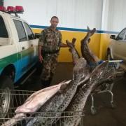 Pescado apreendido em Cassilandia-MS