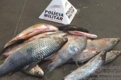 Pescado apreendido em Patrocinio-MG