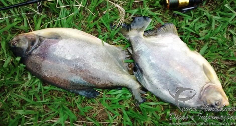 Pescado apreendido em Taboado-MS