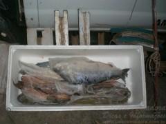 Pescado apreendido em Tapira-PR