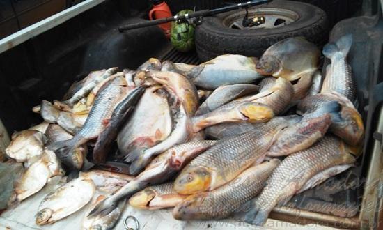 Pescado apreendido no MS