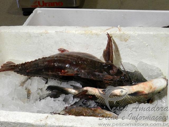 Pescado apreendidos em Rosana-SP 2
