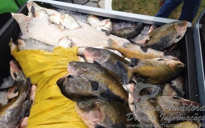 Pescado ilegal apreendido em Manaus