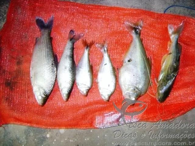 Pescado ilegal apreendido no Rio Negro-MS