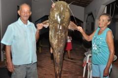 Pescador de 81 anos fisga Jau de 62 kg com uso de linhada no rio Taquari-MS