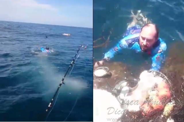 Pescador esportivo liberta tartaruga presa em rede em SC