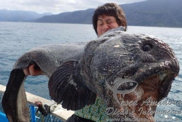 Pescador fisga peixe-lobo em Fukushima no Japao
