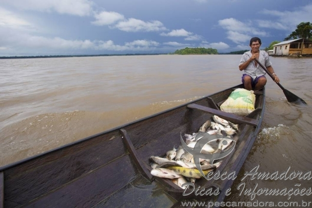 Ribeirinho na Amazônia