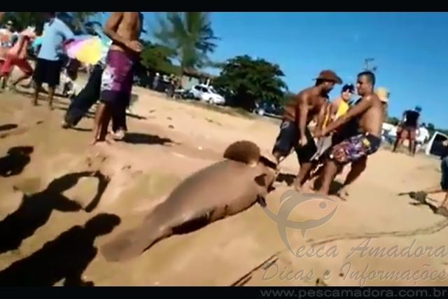 Pescadores abatem Mero em pesca de arrastao em Marataizes-ES