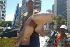 Pescadores capturam tubarao-lixa em praia de Pernambuco 2
