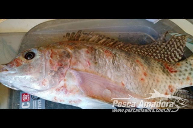 pescadores-denunciam-deformacao-de-peixes-na-foz-do-rio-doce-2