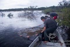 Pesquisa de biodiversidade de peixes na Amazonia 01