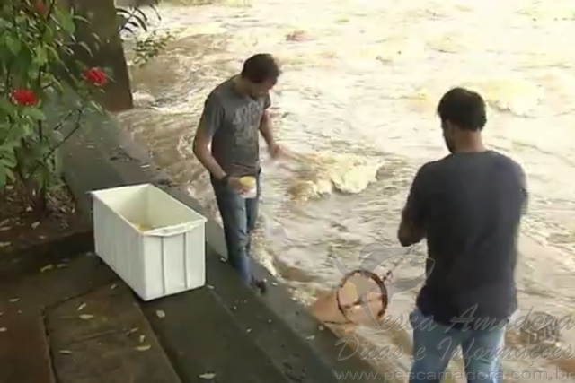 Pesquisadores monitoram reproducao de peixes no Rio Mogi-Guacu-SP 3