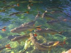 Piraputanga no Pantanal