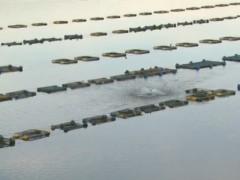 Piscicultor coloca aerador para oxigenar peixes na represa em Caconde-SP