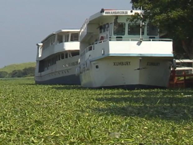 Plantas afetam navegacao no rio tiete