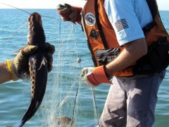 Pma apreende redes de pesca em Epitacio