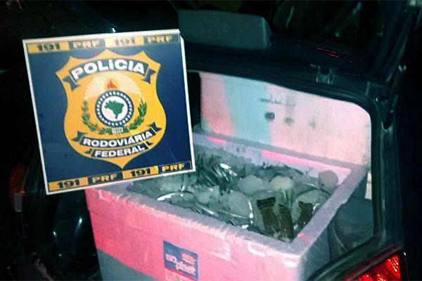 Policia Rodoviaria Federal apreende 150kg de lagosta no RN
