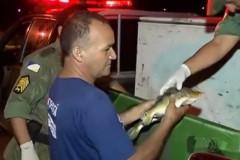 Policia apreende mais de duas toneladas de pescado ilegal no Tocantins 6