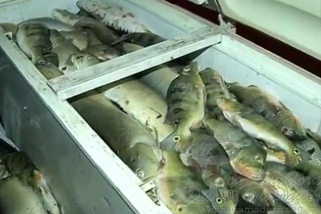Policia apreende mais de duas toneladas de pescado ilegal no Tocantins
