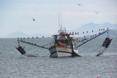 Portaria 445-2014 entra em vigor e proibe a pesca de 475 especies no Brasil