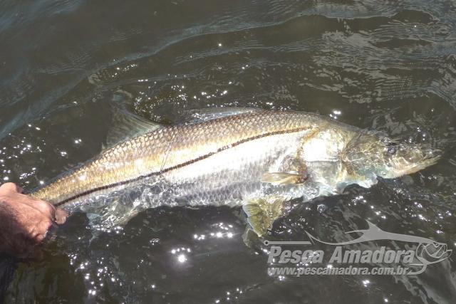 Primeira etapa da Liga Catarinense de Pesca Esportiva acontece nesse sabado - robalo