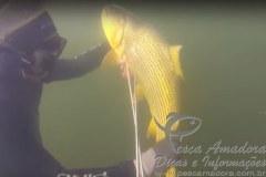 Proibido a pesca subaquatica de especie nativa 2