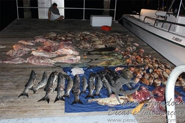 Quatro sao presos por pesca ilegal na Florida