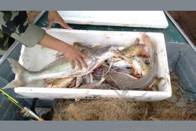 Quatro sao presos por pesca ilegal no rio Tibagi-PR 2