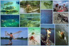recursos-pesqueiros