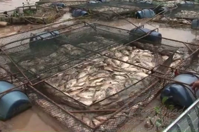 Represa transborda e mais de 150 toneladas de peixes morrem no PR 3