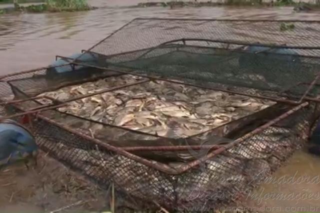 Represa transborda e mais de 150 toneladas de peixes morrem no PR