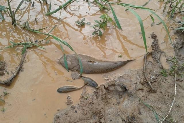 Rio Doce depois do desastre ambiental 8