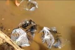 SAAE realiza soltura de 8.000 alevinos no Rio Sao Francisco em Piumhi-MG 2