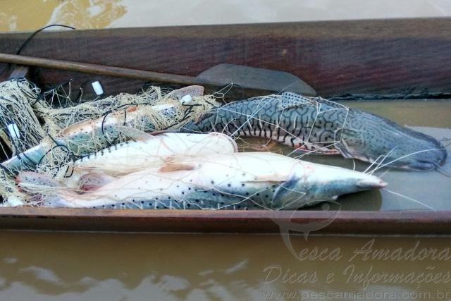 SEMA apreende 200 KG de pescado ilegal durante fiscalizacao em MT