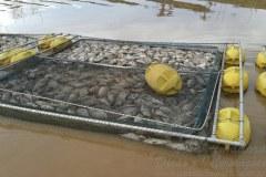 Secretaria do meio ambiente investiga morte de toneladas de peixes em Serra da Mesa-GO 5