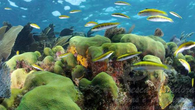 Segundo maior recife do mundo