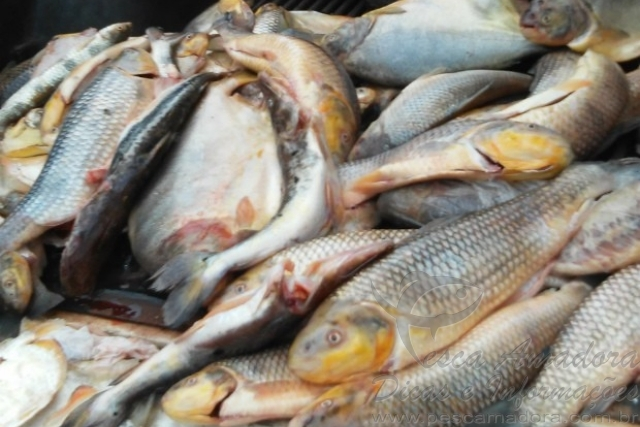Sema apreende 150 kg de pescado ilegal em Barra do Garcas-MT