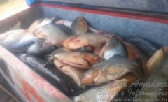 Sema apreende 271 kg de pescado irregular na Transpantaneira no MT